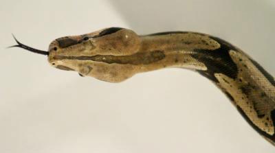 Tìm ra thủ phạm dẫn đến bệnh rắn điên