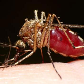 5 điều cần biết về loại virus chết người không thuốc chữa