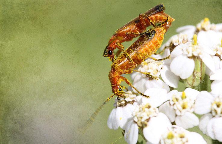 Bức ảnh chụp cảnh hai con kiến đang giao phối tham gia chương trình Green shoots của tờ Guardian.