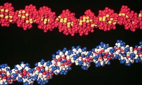Lưu trữ sách ngay trong ADN