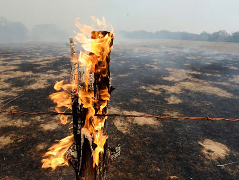 Trong đợt hạn hán kỷ lục ở Mỹ, một hàng rào bốc cháy sau vụ cháy rừng gần Bastrop, bang Texas 5/9/2011. Đợt nắng nóng này đã thiêu cháy gần 1.000 ngôi nhà và hơn 5.000 người sơ tán trong tình trạng khẩn cấp. Theo nhận định của chuyên gia, bang texas chịu đợt hạn hán tồi tệ nhất từ năm 1950.