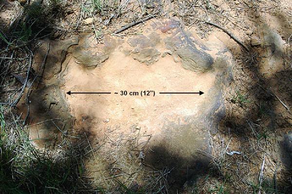 Vết chân khủng long còn in lại đến ngày nay.