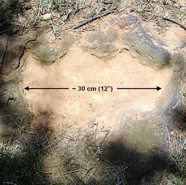 Tìm thấy dấu chân khủng long ở trung tâm của NASA