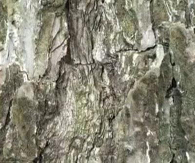 Video: Nghệ thuật ẩn thân của bướm đêm