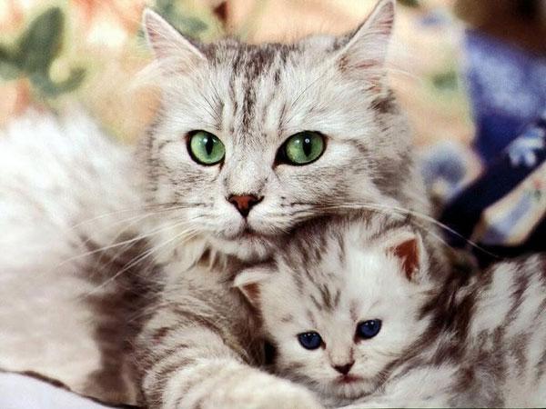 Cuộc sống bí mật của loài mèo
