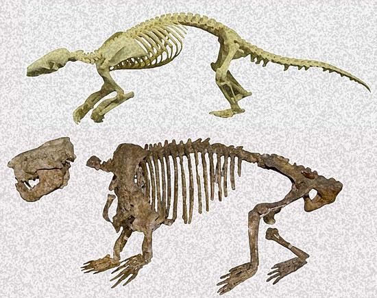 Phát hiện hóa thạch của loài thú có vú đầu tiên