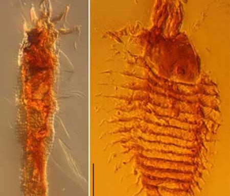 Phát hiện côn trùng cổ đại nhất thế giới