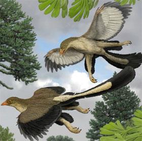 Giải mã bí ẩn của khủng long bay