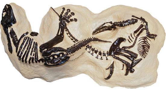 """Hóa thạch """"đại chiến khủng long"""" được đấu giá"""