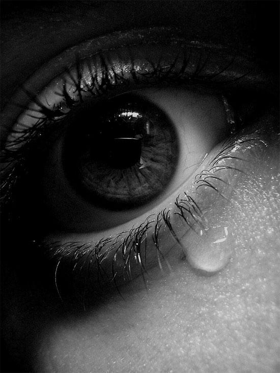 Tại sao chỉ con người và voi biết khóc?