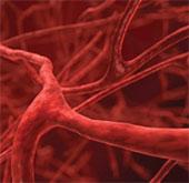 Tạo ra mạch máu từ tế bào gốc