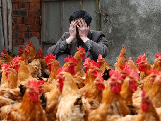 Phát hiện trường hợp đầu tiên nhiễm cúm H7N9 từ người