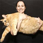 """Video: Mèo béo """"tập giảm cân"""""""