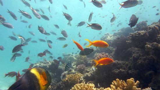 Siêu kháng sinh từ đại dương