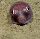 Vẻ đẹp của sinh vật dưới đáy đại dương