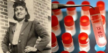 Bí ẩn về các tế bào cơ thể người bất tử