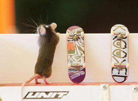 Chuột lướt ván nhảy qua vòng lửa