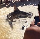 """Video: Du khách """"đỡ đẻ"""" cho cá mập"""