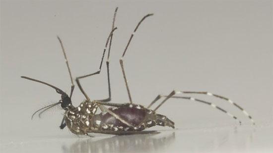 Đột phá trong việc tìm vắcxin phòng sốt xuất huyết
