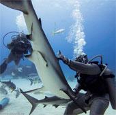 """Video: Xem màn """"thôi miên"""" cá mập dưới đáy biển"""