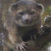Tìm thấy động vật có vú mới ở Nam Mỹ