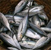 Ăn cá giúp giảm nguy cơ mắc viêm khớp dạng thấp