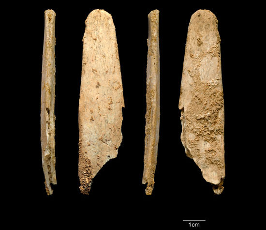 Công cụ bằng xương 51.000 năm tuổi