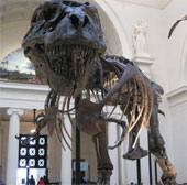 Liệu có thể xác định được giới tính của những hóa thạch khủng long?