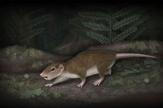 Phát hiện loài động vật có vú cổ xưa nhất
