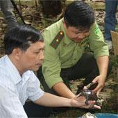 """Việt Nam đón 71 con rùa """"hồi hương"""" từ châu Âu"""