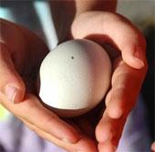 Gà đẻ ra trứng màu xanh nhờ kỹ thuật gene