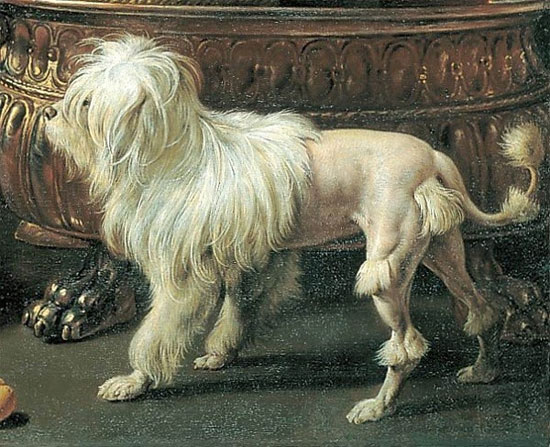 """Những loài chó xù có vẻ đẹp """"ma chê quỷ hờn"""""""