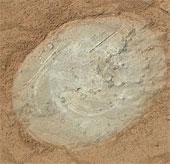 Sao Hỏa có sự sống?