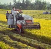An Giang tạo được giống lúa chịu ngập và chịu hạn