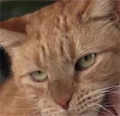 Mèo được cứu sống nhờ máu chó