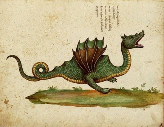 Hình vẽ rồng của nhà khoa học Aldrovandi