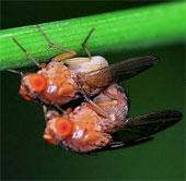 Triệt tiêu khả năng sinh sản của sâu bệnh