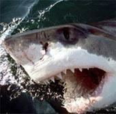 Video: Giải mã cá mập sợ xác chết của đồng loại