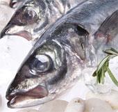 Ánh nắng ảnh hưởng đến hàm lượng thủy ngân trong cá