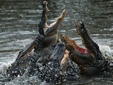 Cá sấu