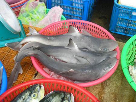 Phát hiện loài cá mập mới ở chợ