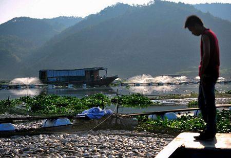 Những người nuôi cá cho rằng các chất ô nhiễm thải ra từ các doanh nghiệp gần đó có thể là nguyên nhân.