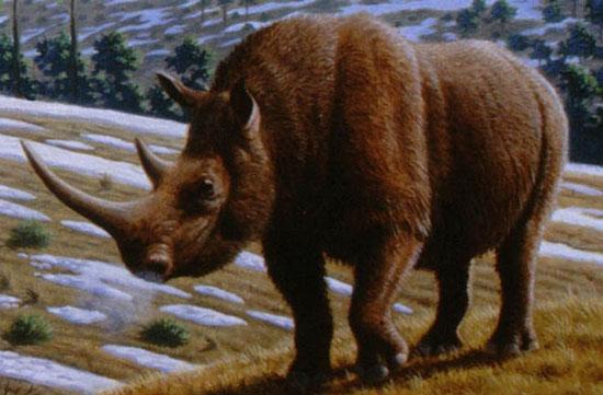Phát hiện nhiều loài vật khổng lồ sống ở cao nguyên