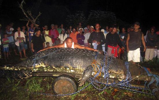 Bắt sống được cá sấu to chưa từng thấy ở Philippines