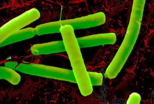 Vi khuẩn vô hại trong đất diệt được ung thư?