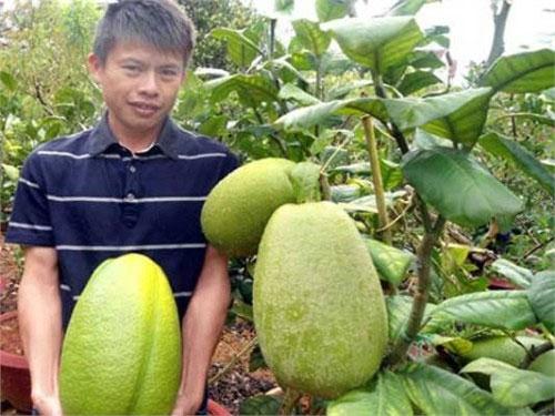 Quả chanh khổng lồ nặng 3,5kg ở Lâm Đồng