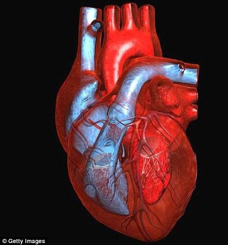 Trong tương lai không xa, tim người sẽ được tạo ra trong phòng thí nghiệm. (Ảnh: Dailymail)
