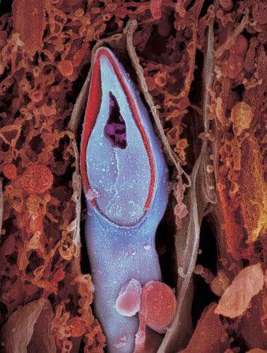 Vật liệu di truyền được giữ ở đầu của mỗi tình trùng