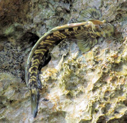 Cá sống trên cạn