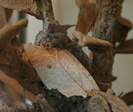 Hình ảnh cây gần hoá thạch ở Thanh Hoá